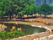 北京南海子麋鹿苑之旅