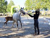 欧亚之旅 葡萄牙—不会骑马的司机不是一个好游客