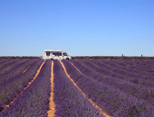 视频解说欧洲行:走进梦中的普罗旺斯薰衣草田