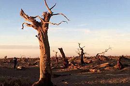 死亡之海的诱惑 凯友实拍中国最大沙漠—塔克拉玛干!