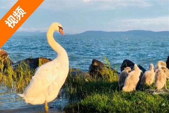 参观地球夫妇的2018亚欧之旅:害羞的巴拉顿湖(第76天)